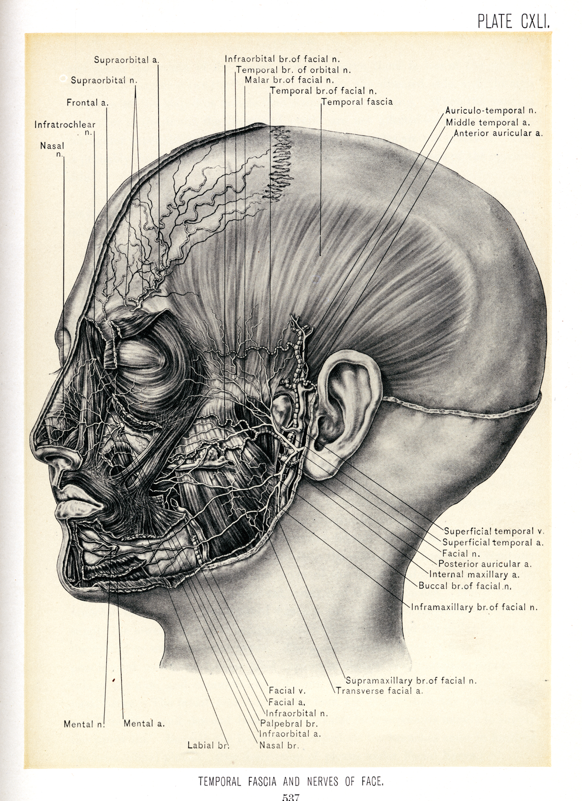 Surgical anatomy : a treatise on human anatomy in its application to the practice of medicine and surgery /