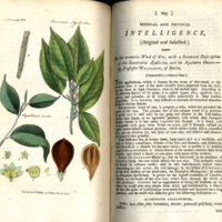 Medical and physical journal, vol. 2 Nov. 1799, no. viii, plate (between p. 292 & 293) Excoecaria Agallocha.jpg