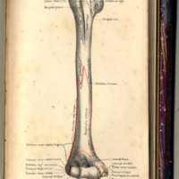 Holden, Luther, 1815-1905. Human Osteology, Plate L.jpg