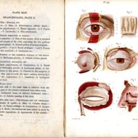 4Students anatomy bellamy029.jpg