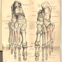 Holden, Luther, 1815-1905. Human Osteology, Plate XXXVII.jpg