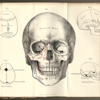 Holden, Luther, 1815-1905. Human Osteology, Plate XVIII.jpg