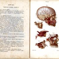 2Students anatomy bellamy027.jpg