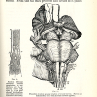 Grainger, Stewart. An introduction to the study of the diseases of the nervous system (1884), p.11.jpg