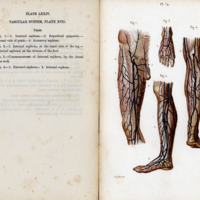 1Students anatomy bellamy026.jpg