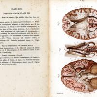 6Students anatomy bellamy031.jpg
