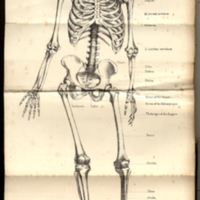 Holden, Luther, 1815-1905. Human Osteology, Title Page Fold Out Skeleton Illustration.jpg