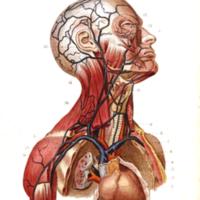 Students anatomy bellamy024.jpg